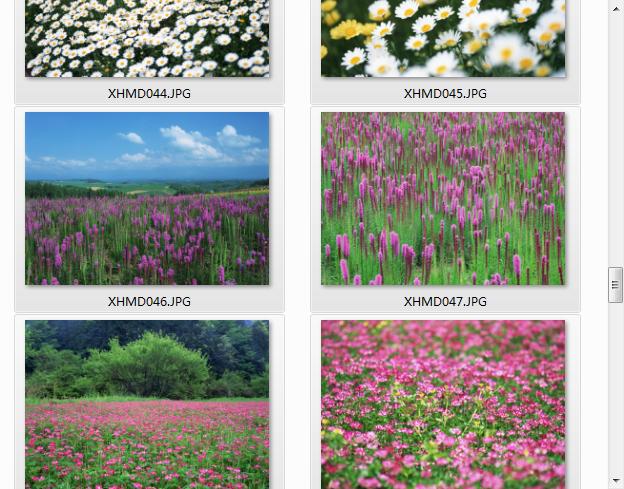 精美鲜花图片集(2094x2950) JPG高清版2010