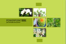 绿色简约植物主题PPT模板