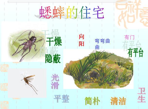 蟋蟀的住宅公开课课件PPT模板