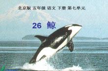 《鲸》免费学习课件PPT模板