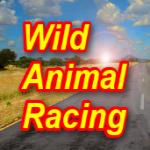 野生动物赛车汉化补丁