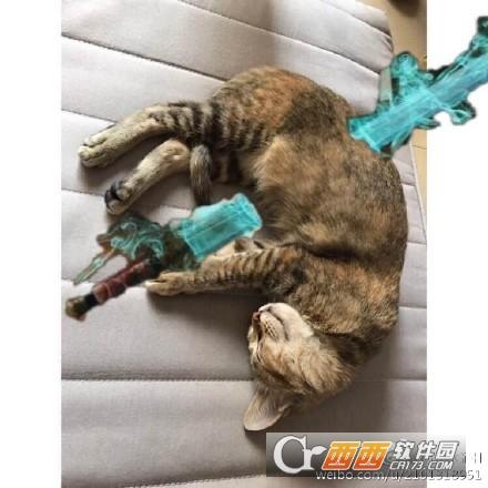 鬼怪插剑同款猫咪表情包 高清无水印版