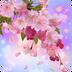 桃花社区安卓版2.0.12