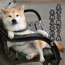 柴犬我要学习表情包