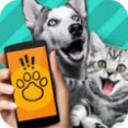 人犬交流器软件