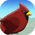 Bird On Trip
