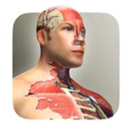放置人体模型软件
