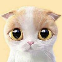 酷酷的猫系列QQ微信情头大全