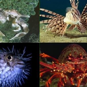 海底世界ppt课件