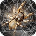蜘蛛模拟生存模拟器