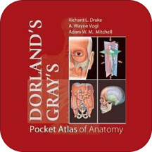 口袋解剖图谱Pocket Atlas of Anatomy TR