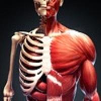 发现人体ARv1.0.0 安卓版