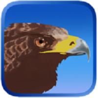 鹰狩猎之旅破解版