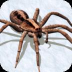 打蜘蛛模拟器中文手机版