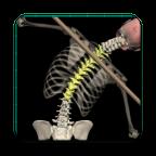 Posture(动态解刨模型)