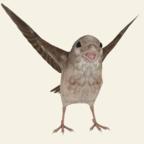 救救那小鸟v1.2 安卓版