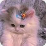 猫爪app(手机多功能工具箱)
